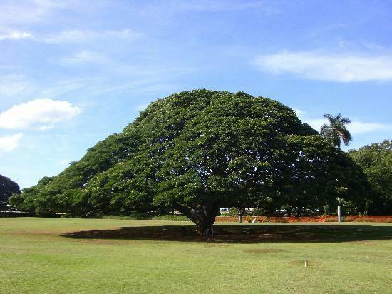 樹木を枯らした者の罪