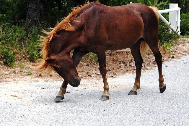 因果応報の実録:馬になった女性