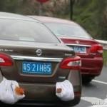 中国人の「知恵」=車で生き物を運ぶには?