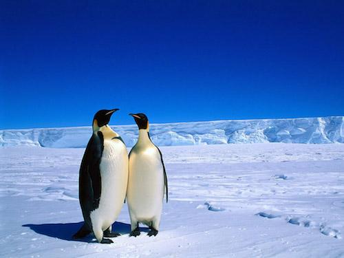 「中国人のいないところなし」南極が荒らされてる