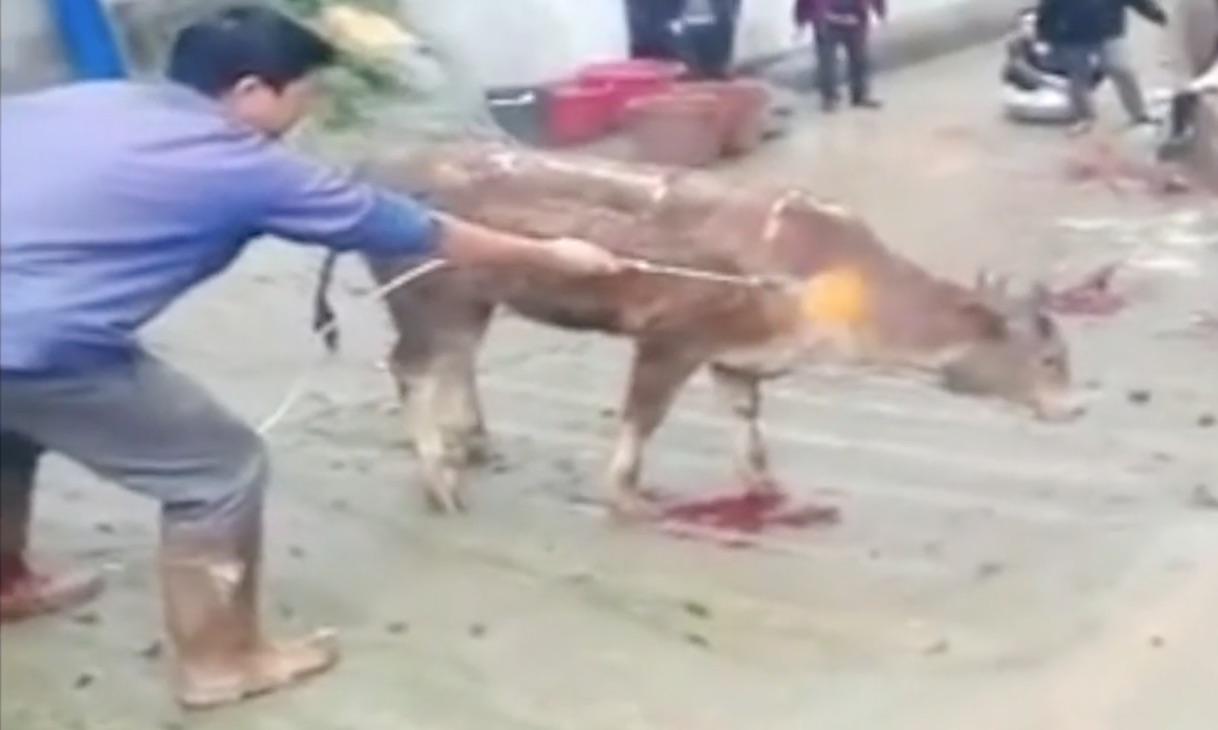 【閲覧注意】バーナーで生きた牛を焼き殺す男にネット民が激怒